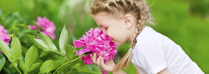 Young girl smelling large pink peony